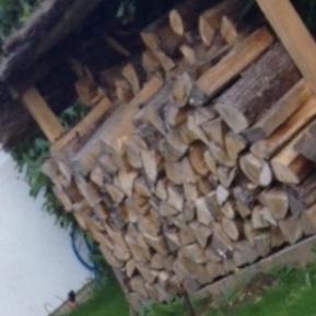 Création abris bois